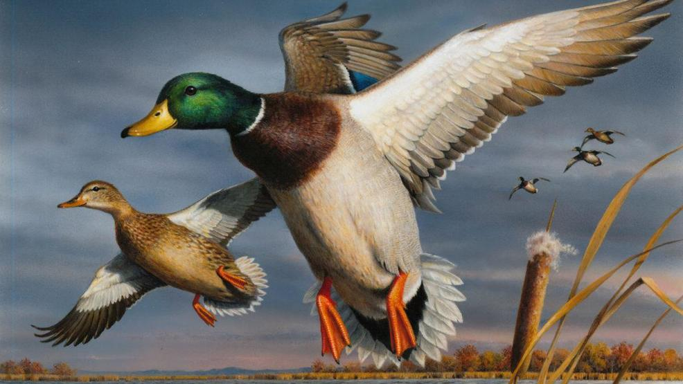 DuckStamp 2018 19