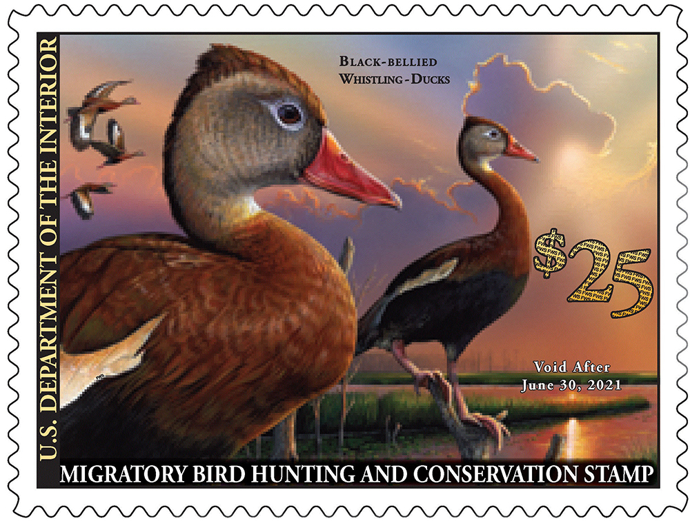 Duck Stamp 2020